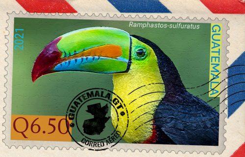 El tucán pico,Ramphastos sulfuratus