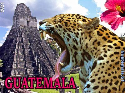 El jaguar (Panthera onca) y el Templo del Gran Jaguar, Tikal, Petén, Guatemala